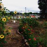 ¿Qué es un huerto urbano? Beneficios y tipos