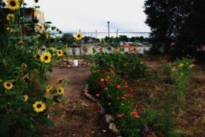un jardín urbano con flores preciosas.