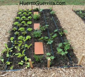 Un huerto urbano recien plantado