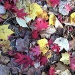 ¿Qué es el compost? Definición y razones para hacer compostaje