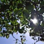 5 técnicas simples y trucos para ahorrar agua en los huertos.