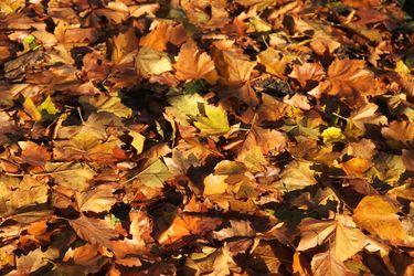suelo del bosque en otoño