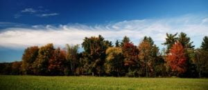 bosque con bonitos colores