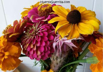 flores cortadas de Zinnias, tagete, Rudbeckia