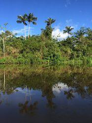 selva amazonas