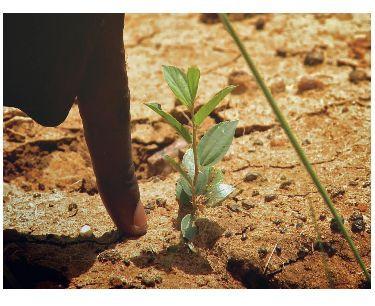 arbol pequeño en Burkina Faso