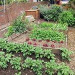Rotación de cultivos. Distribuir las plantas en el huerto.