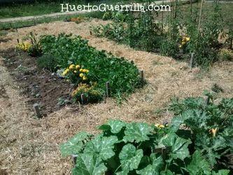 huerto con hortalizas en los bancales que hacen la rotación de cultivos.