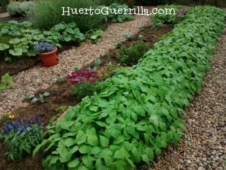huerto con plantas y flores