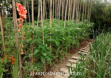 huerto con pasarela de madera tomates y cebollas