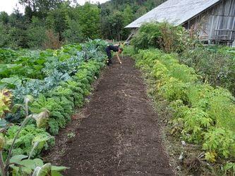 zona de cultivo en un huerto