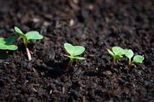 tierra oscura plantas brotando