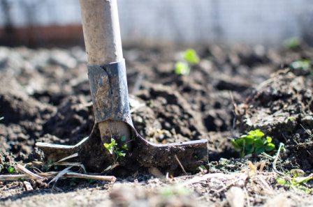 una pala clavada en tierra del huerto.