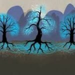 ¿Los árboles se comunican?