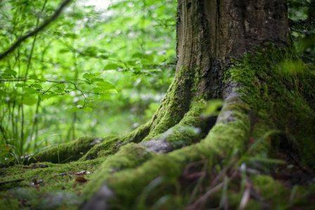 raices de un árbol