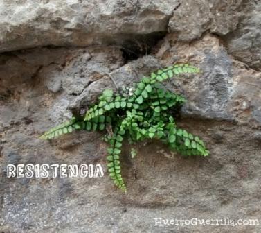 planta entre piedras de un muro