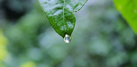 gota de agua de lluvia en hoja