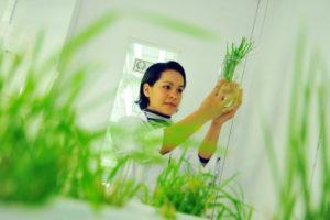 desarrollo limentación laboratorio
