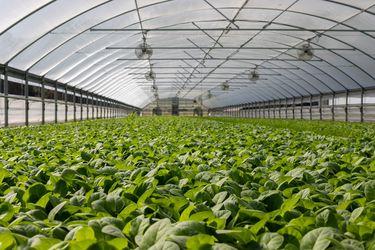 plantas cultivadas en invernadero