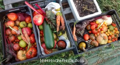 El placer de comer la cosecha del huerto