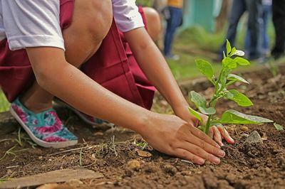 ¿Por qué plantar un árbol?