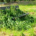 Eliminar malas hierbas del huerto.