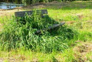 banco de un parque lleno de malas hierbas